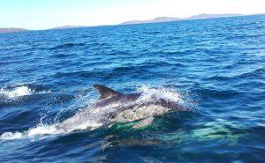 Ullapool dolphin